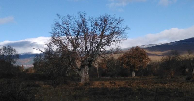 2 Terrenos rústicos en Villar del Ala