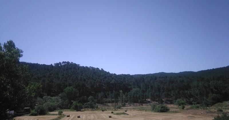 Vistas al pinar en piso de 3 dormitorios en Navaleno